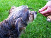 Gut für die Haustiere: Bio-Futter