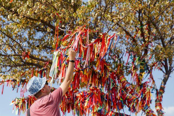 Der Wunschbaum: Brauchtum, Touristen-Magnet und Attraktion auf der Hochzeit
