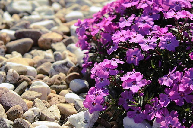 Gartengestaltung Mit Steinen Gräsern Und Pflanzen Depub