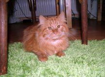 Garfield auch im echten Leben!