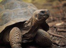 Was Schildkröten fressen